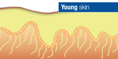 Glycation young skin